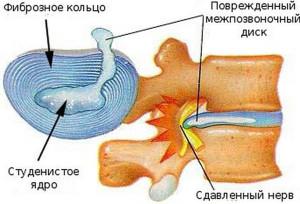 klinika-grigi-1